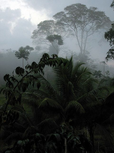 Tropical Forest Gray Scale Light And Shadow Foret Tropicale