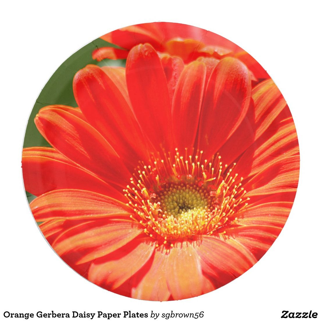 Orange Gerbera Daisy Paper Plates | Pinterest | Gerbera
