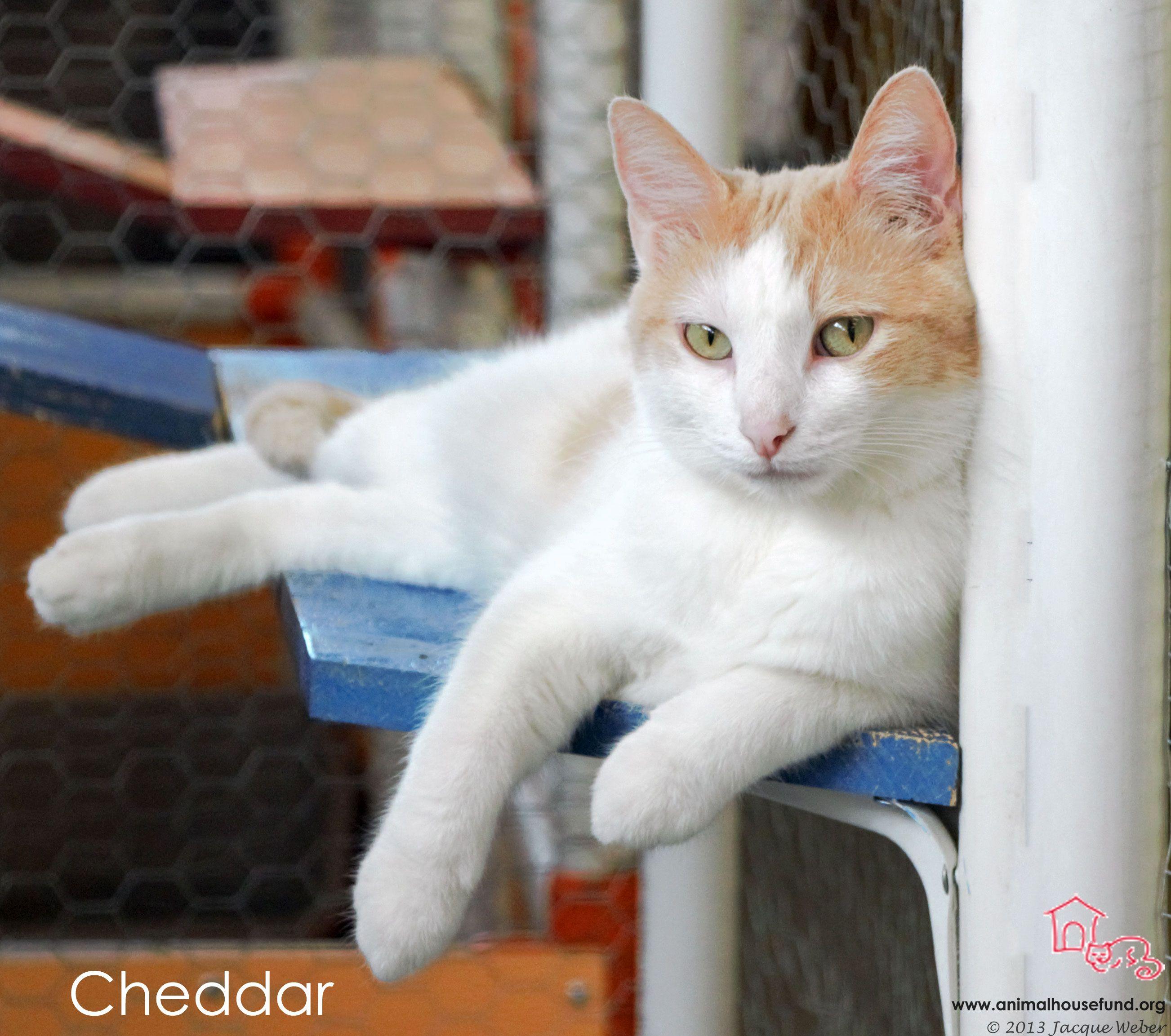 Adopt Cheddar on Кошки