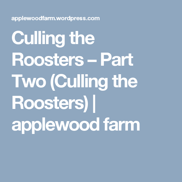 Culling the Roosters – Part Two (Culling the Roosters) | applewood farm