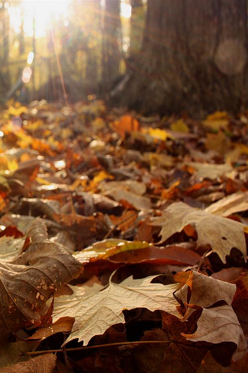 Sonnenaufgang im Wald genießen >>