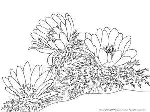 冬の花のぬりえ ぬり絵や方法 Colorful Flowerscolorflowers
