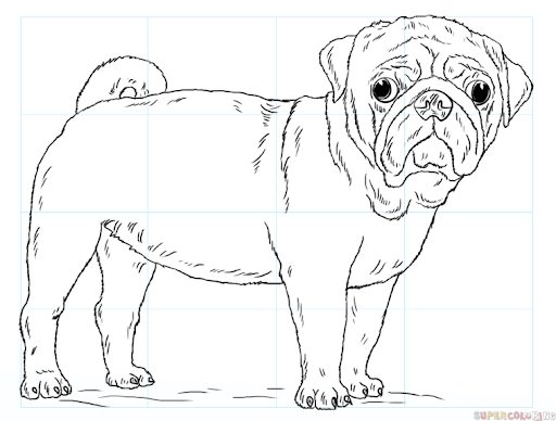 Realistic Pug Drawing Step By Step Google Search In 2020 Puppy Coloring Pages Dog Coloring Page Dog Drawing Tutorial