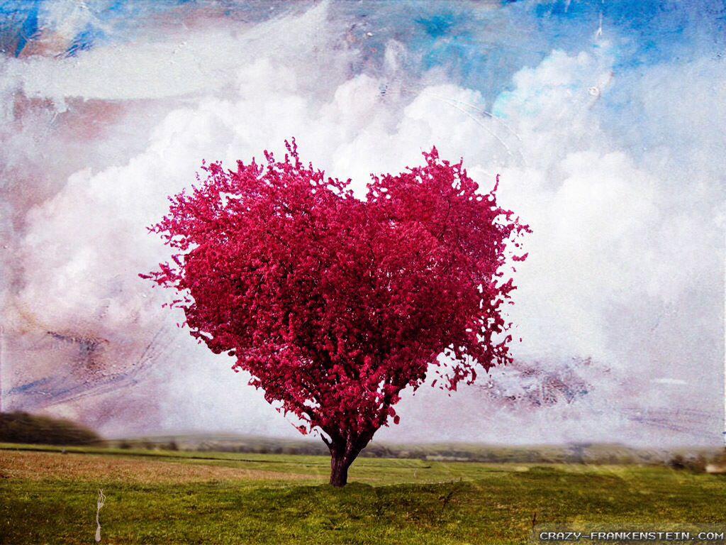 Heart-shaped tree Valentine s Love Pinterest