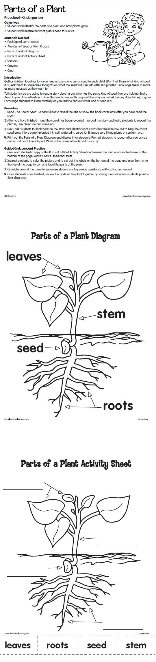 Parts of a Plant from Lakeshore Learning: Kids identify the parts of a plant and learn how plants grow!