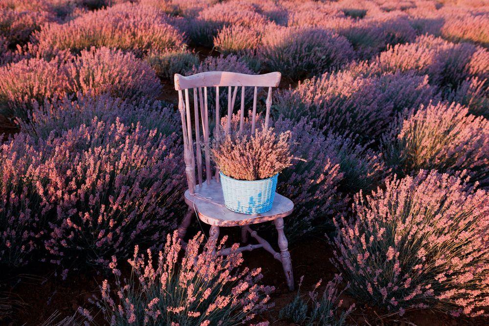 Lavender flowers for your wedding / Flores del lavanda para tu boda #BarceloWeddings #Weddings #Flores #Lavanda #Lavernder #Flowers