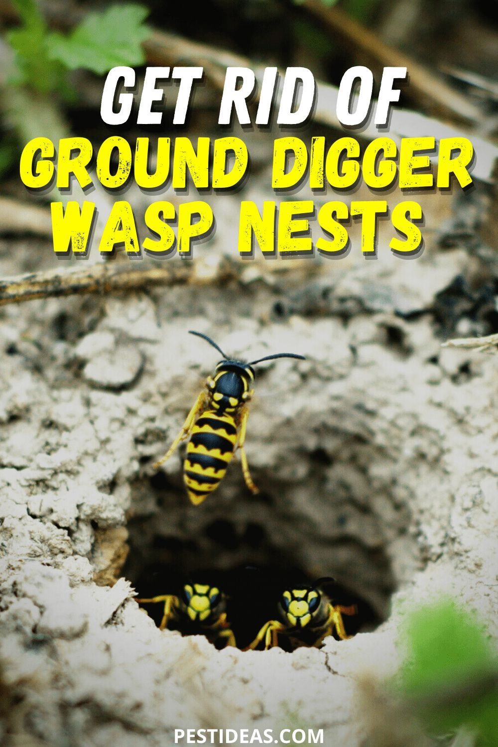Get rid of ground digger wasp nests in 2020 wasp nest