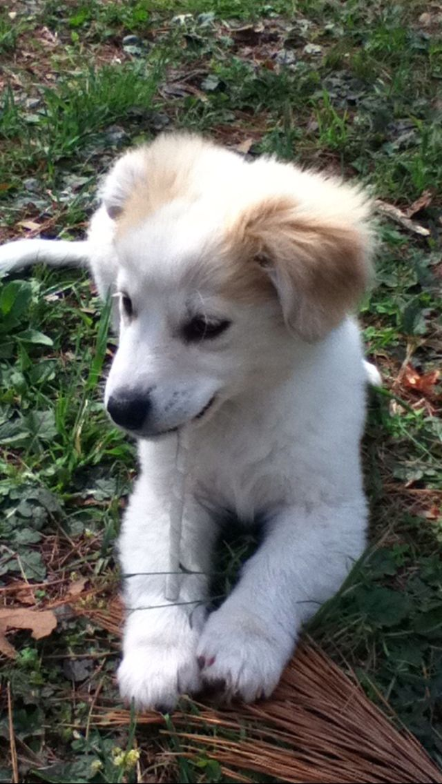 Soooo Cute She S A Corgi Husky Lab Mix I Neeed This Dog In