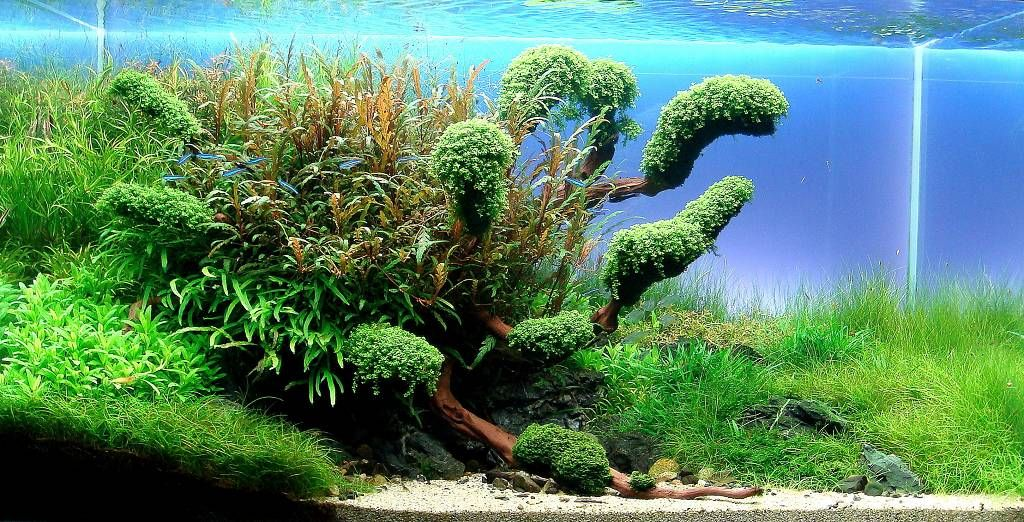 Ryoboku By Thorsten Lampe Another Riverside Style Mastering The Greenny On The Woods Stunning Work Aquascape Nature Aquarium Aquascape Aquarium