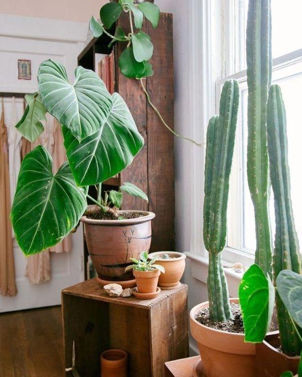 Комнатные растения в интерьере 18 фото и видео (с ...