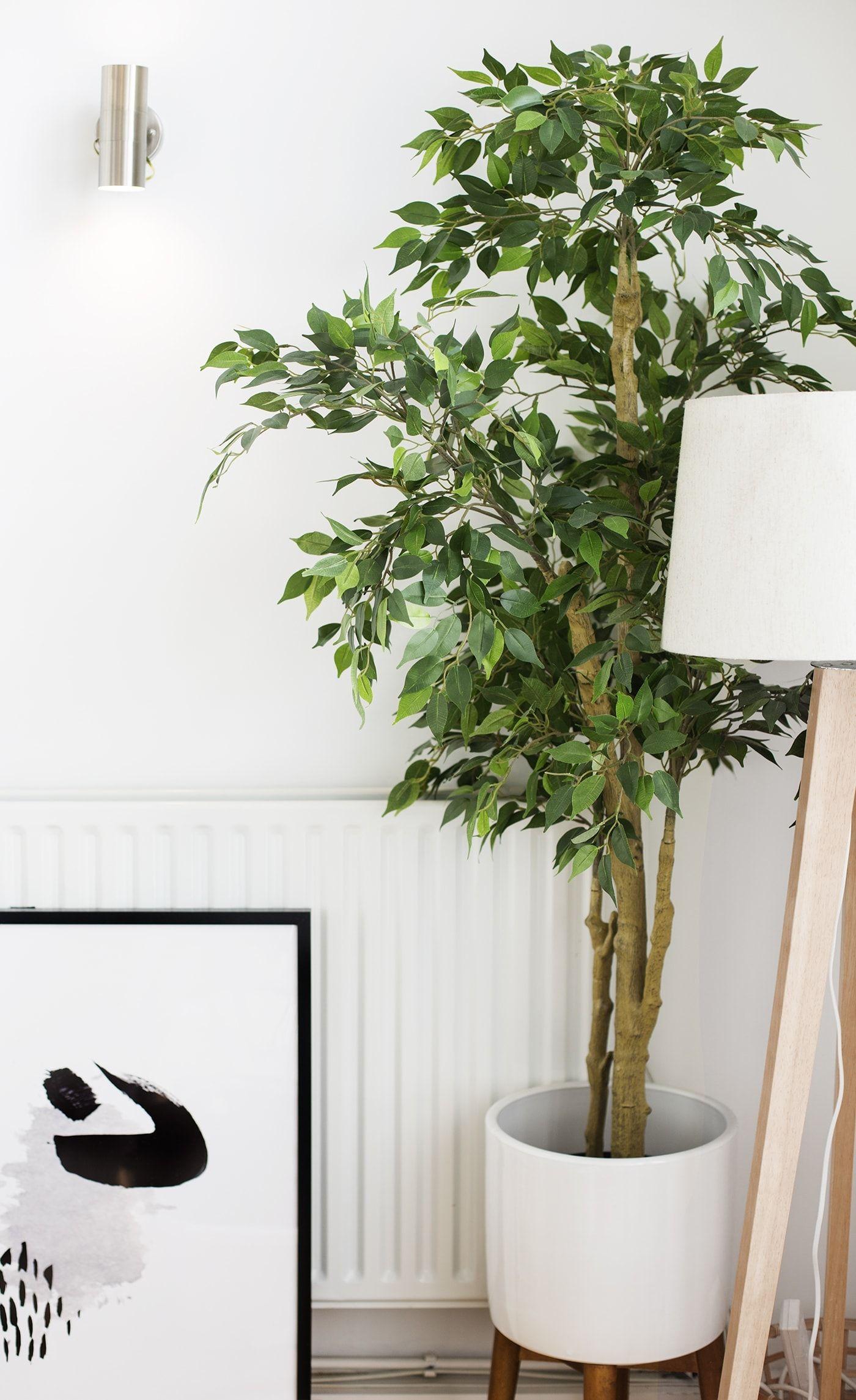 Si Vous Avez Un Doute Faites Semblant Feuille De Monstre Et Arbre D Ikea Quand Je Dis Que J Ai Un Amour Plante Verte Interieur Fausse Plante Plante Monstera