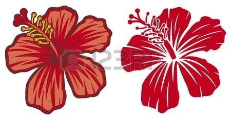 Dessin Fleur Hibiscus Belle Fleur D Hibiscus Rouge Illustration
