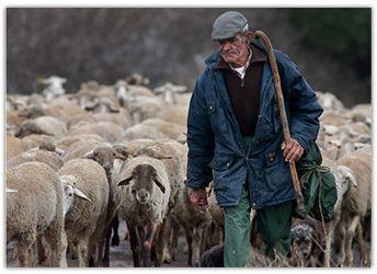 Resultado de imagen para pastores y ovejas