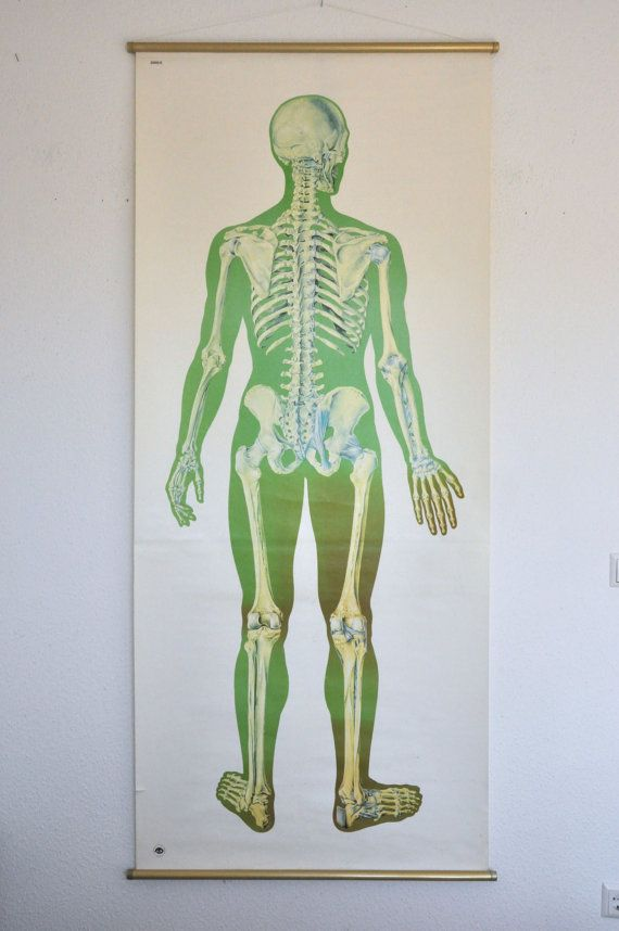Life Size Original XL Human Anatomy Poster. Germany. Pull Down Chart ...