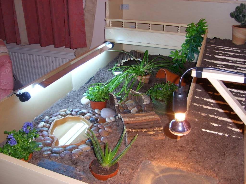Esme & Hermans new home Indoor Enclosures Tortoise