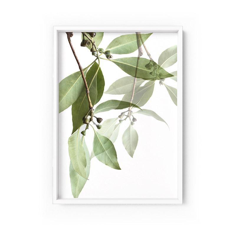Wall Art Gum Tree Leaves No 1 Framed Unframed Art Print A 623plt50 Leaf Art Unframed Art Stretched Canvas Wall Art