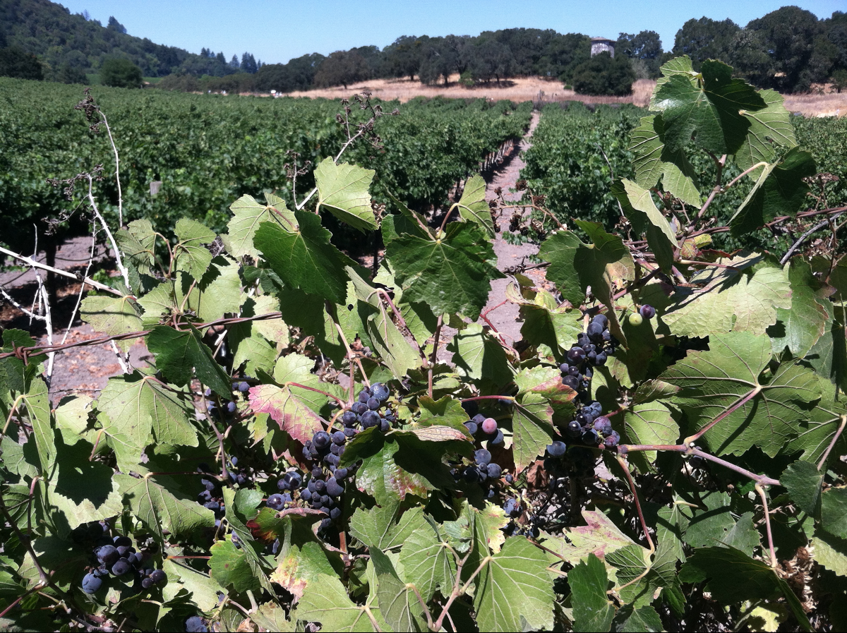Ten Bay Area Wineries That Will Serve You Free Wine