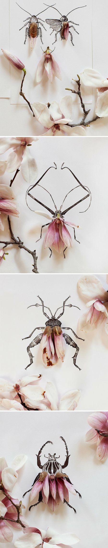pink magnolia petals & black ink beetles by Kari Herer