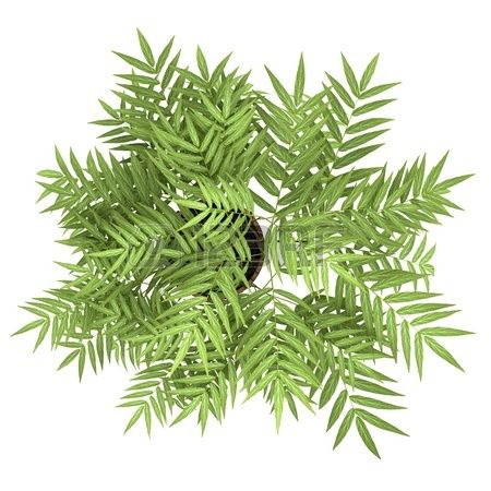 vue de dessus d arbre d coratif en pot isol sur fond blanc banque d 39 images pinterest. Black Bedroom Furniture Sets. Home Design Ideas