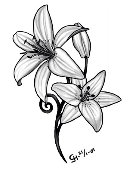 Daffodil March Birth Flower Tattoo Ideas Lilly May Birth Flower Tattoo Ideas B W Watercol Lily Flower Tattoos Tiger Lily Tattoos Calla Lily Tattoos