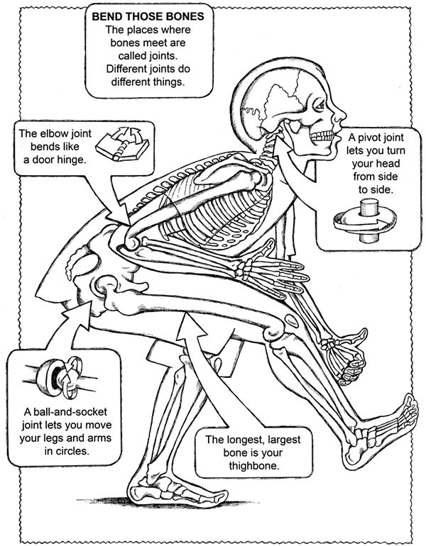 Free Coloring Page From Dover Publications Human Body Unit