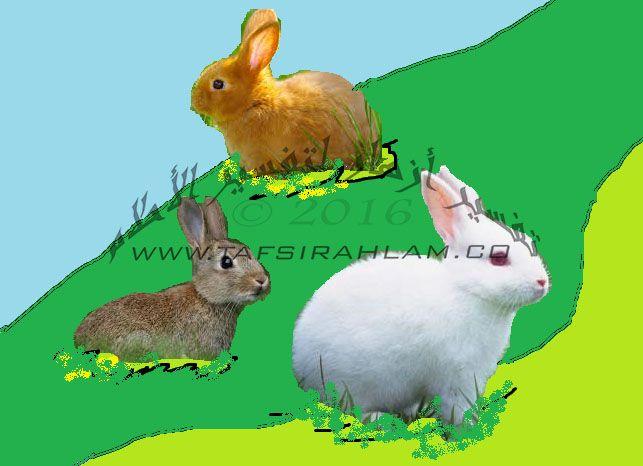 الأرانب في المنام