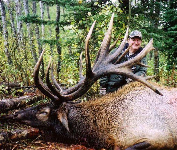 Huge Elk Saskatchewan High Fence Guaranteed Elk Hunting