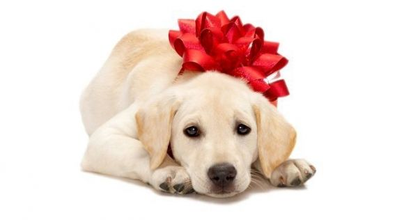 Adorable Dog With A Big Red Bow On Its Head Christmas Puppies