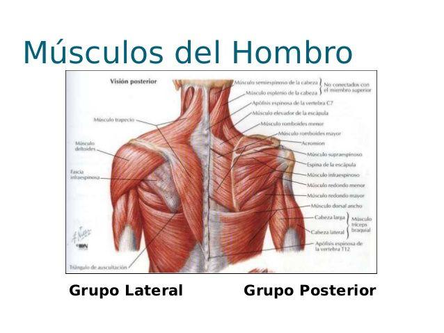 hombro - Buscar con Google | fisioterapia | Pinterest | Fisioterapia ...