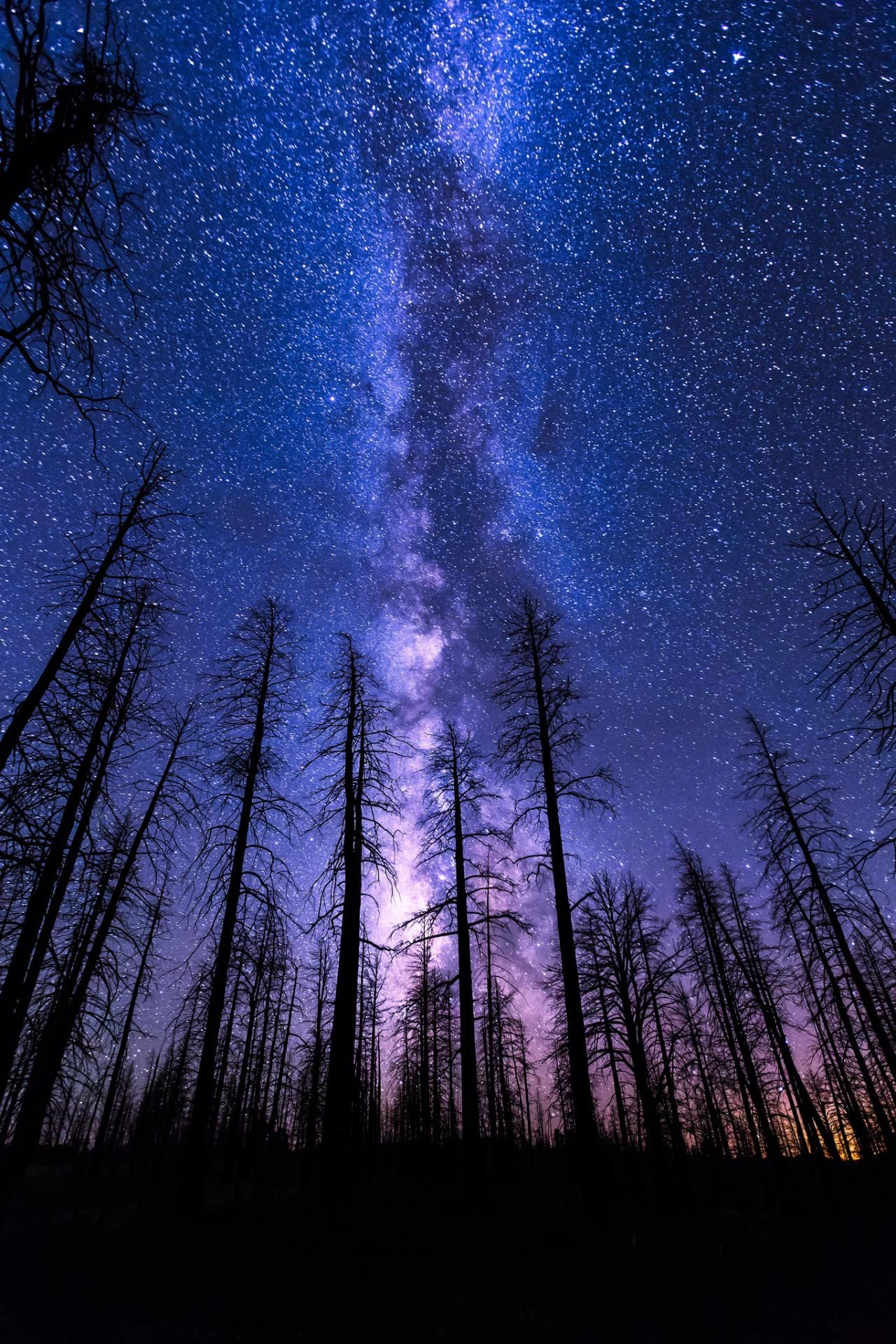 Mobile Hd Wallpapers Night Sky Start Forest Milkyway Violet Night Sky Wallpaper Night Sky Photography Night Skies