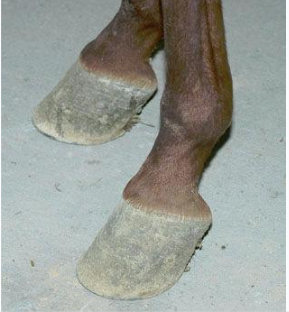 Navicular Revisited