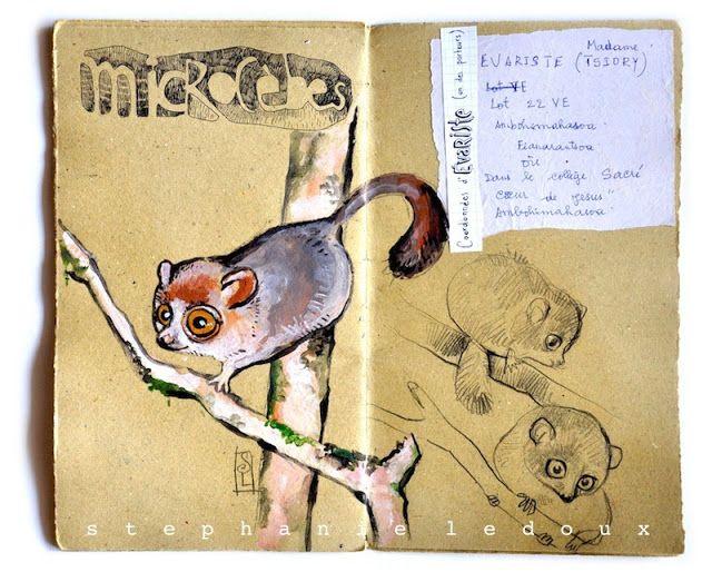 Carnet De Voyage A Madagascar Animaux Pinterest Carnets Voyages Et Lemurien