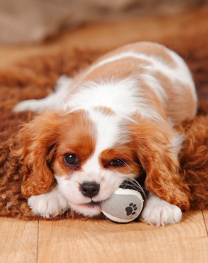 The Best LowMaintenance Dogs for People with SuperHectic