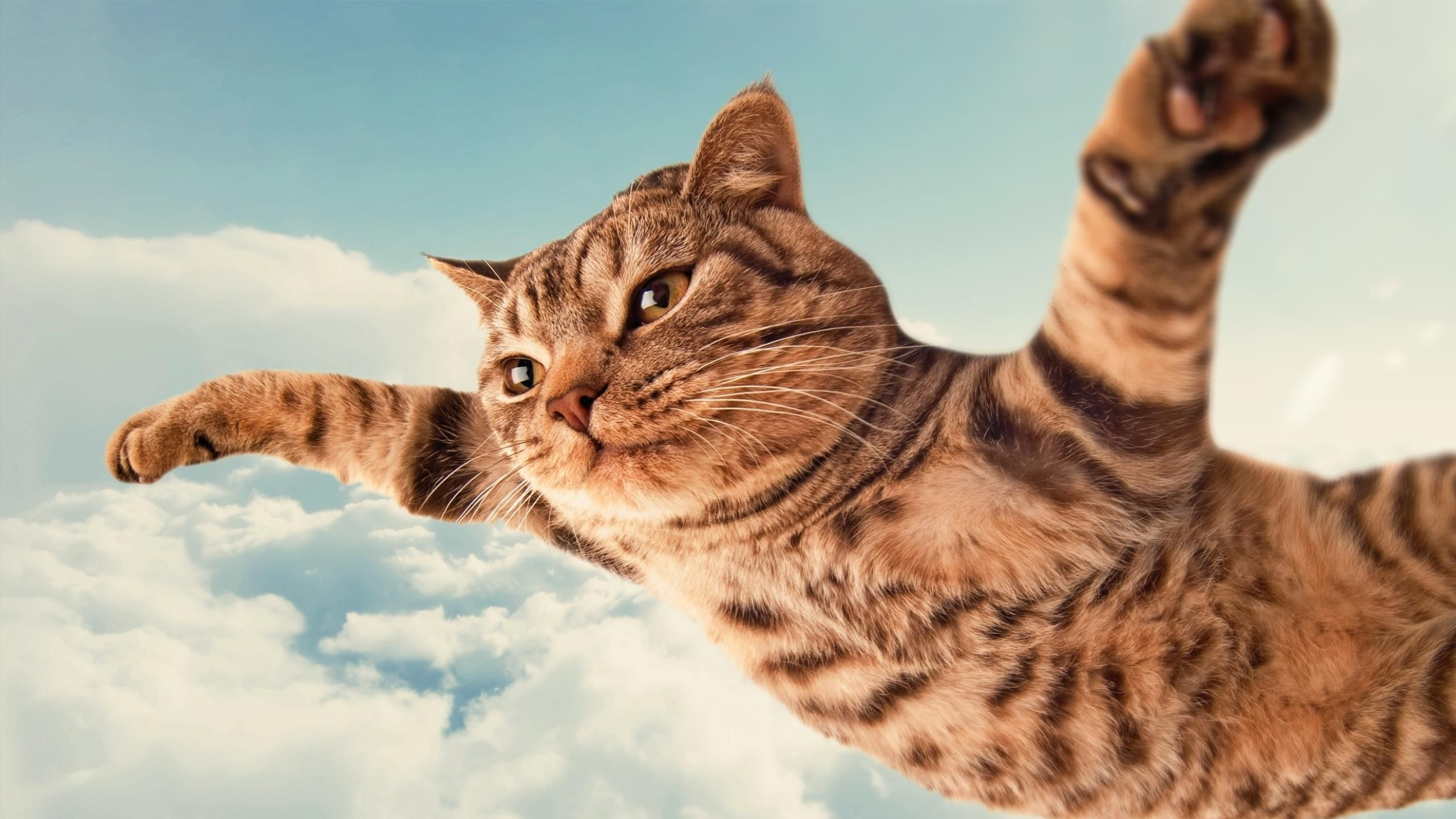 Cool Flying Cat Funny Wallpaper Other Wallpapers Pinterest