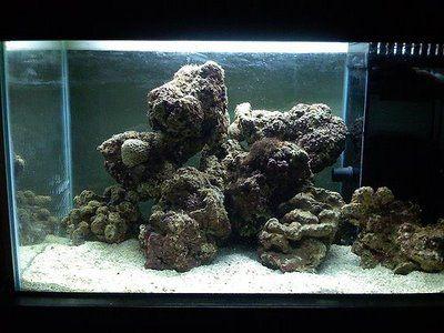 Aquarium Rocks