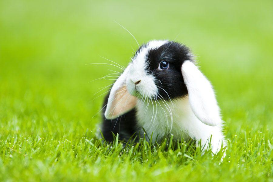 Rabbit Insurance Do I need to insure my rabbit? Pet
