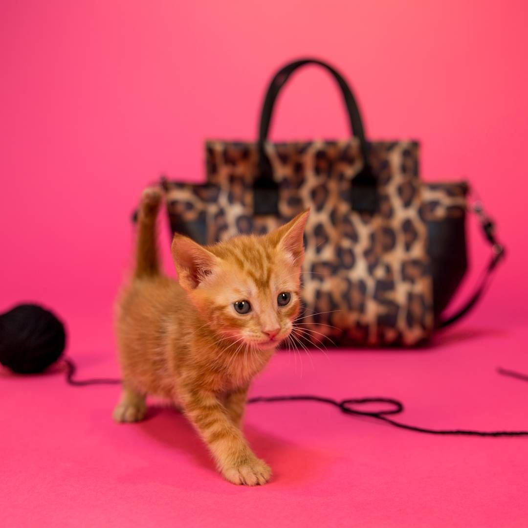 You Ve Got To Be Kitten Me Stay Tuned For Firstfriday And Trust Us It Ll Be Purr Fect Harvey S Instagram Posts Purring