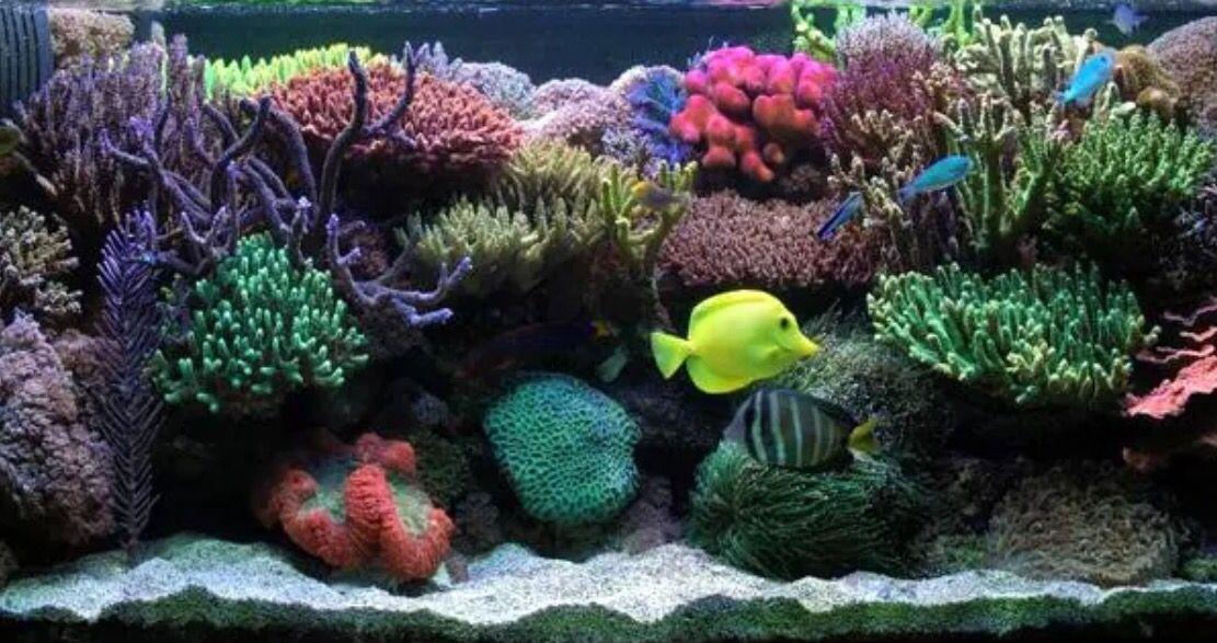 marine aquarium screensaver mac os x