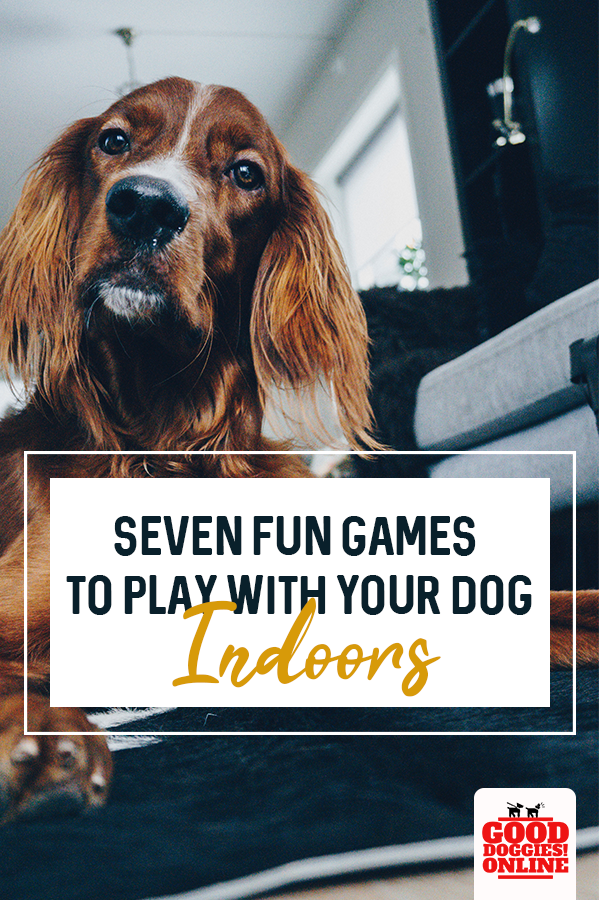 Seven Fun Games to Play with Your Dog Indoors Bored dog