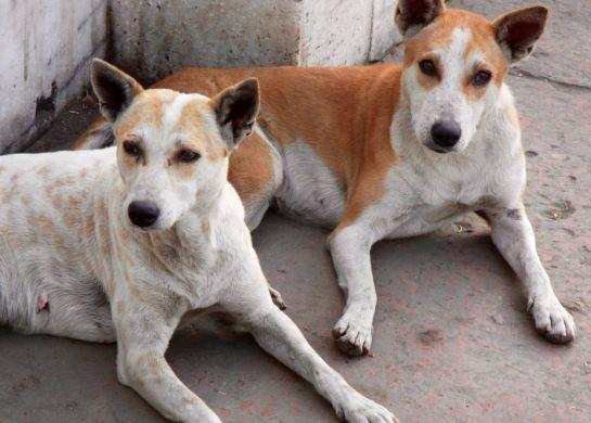 Exploring Calcutta India Now Kolkata Street Dogs Homeless Dogs Dog Photos