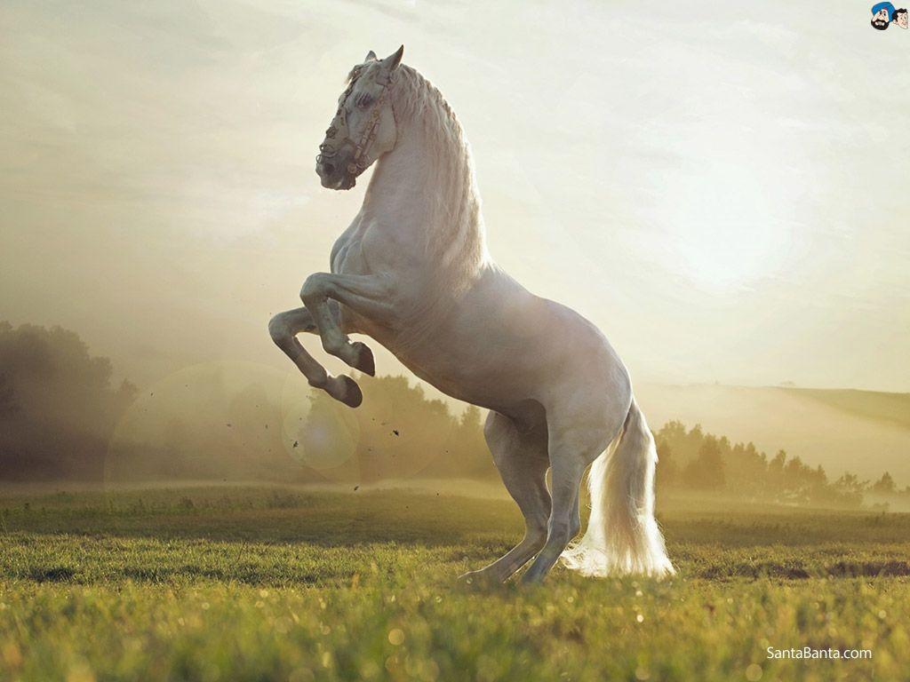 Most Inspiring Wallpaper Horse Iphone 5s - 7f94d65a9c4621a73b9e2de1d77bbd37  Gallery_419392.jpg