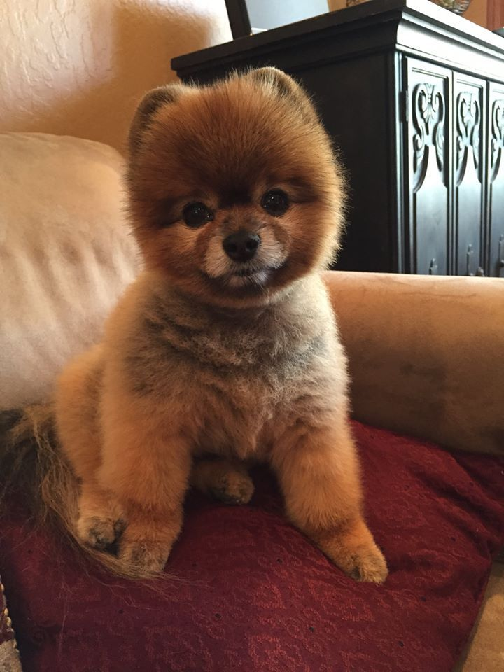 Popular Bear Brown Adorable Dog - 7f94eaa10990a5be4a79179110f18267  2018_944179  .jpg
