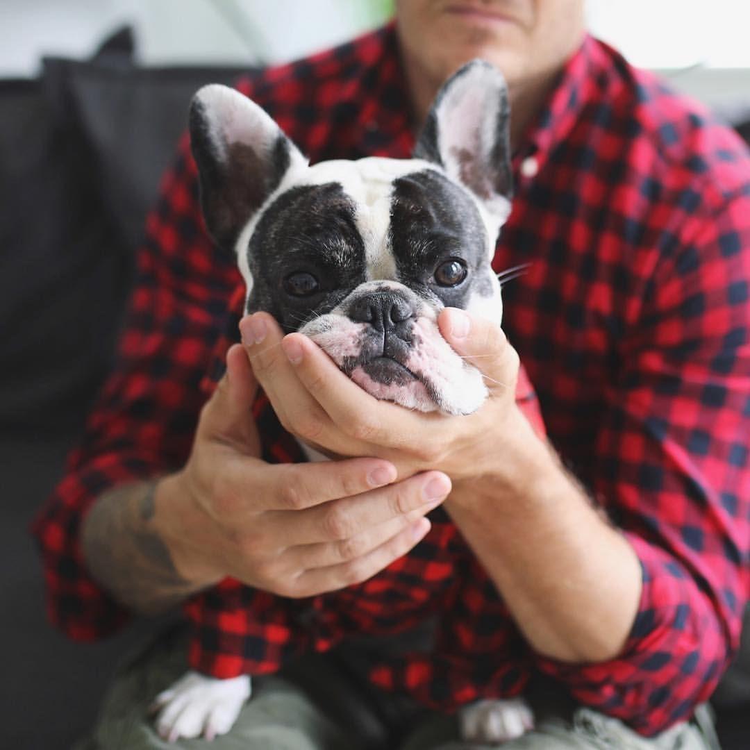 Violet The Smoosh Face French Bulldog Buldog Baby Pug Dog