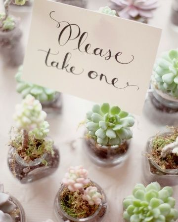 Succulents As A Little Take Home Gift Love It Landscape 1