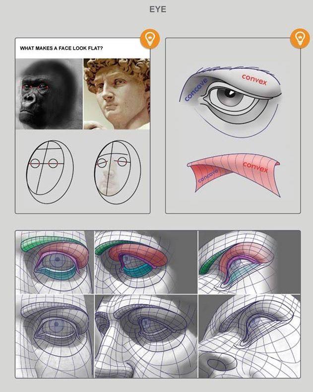 Eye socket topography. | ART - Art Ref | Pinterest | Anatomy ...