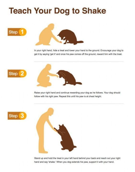 Teach Your Canine To Shake Hands Dog Training Dog Training