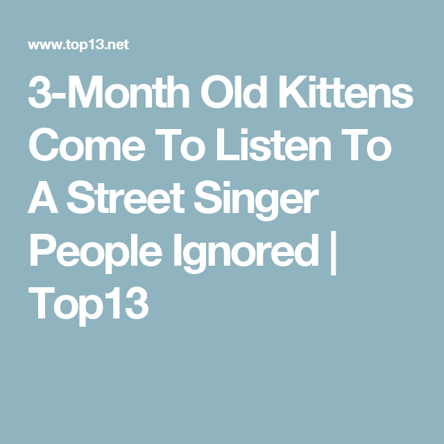3-Month Old Kittens Come To Listen To A Street Singer People Ignored | Top13