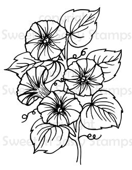 morning glory coloring pages blog retailers