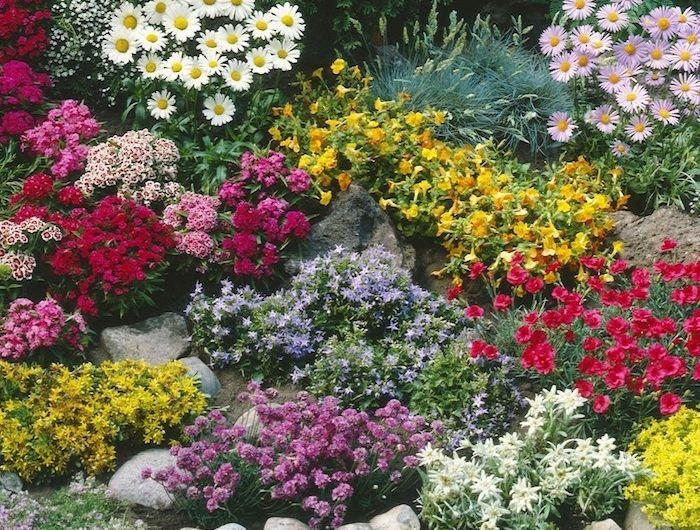 plante couvre sol un tableau de couleurs naturelles dans votre jardin plante. Black Bedroom Furniture Sets. Home Design Ideas