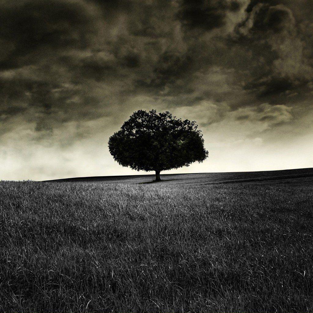 Dark Lonely Tree HD IPad Wallpaper